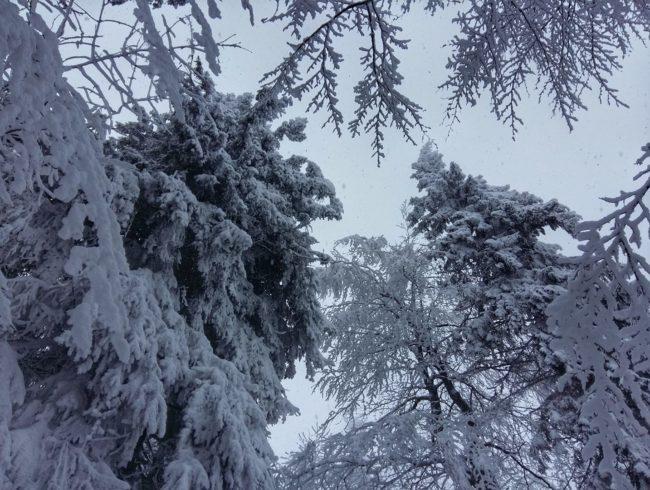 17 лютого <br>Львів - Татарів